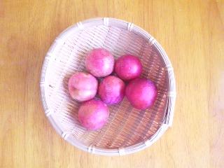 プラム収穫-1